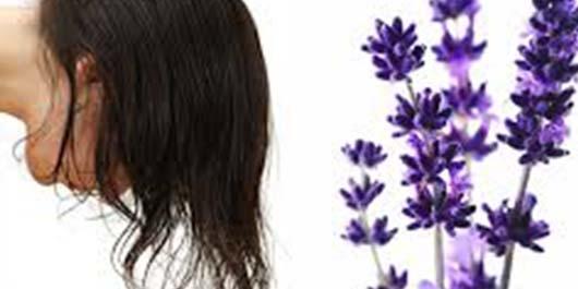 Saç Çıkaran Bitkiler 2