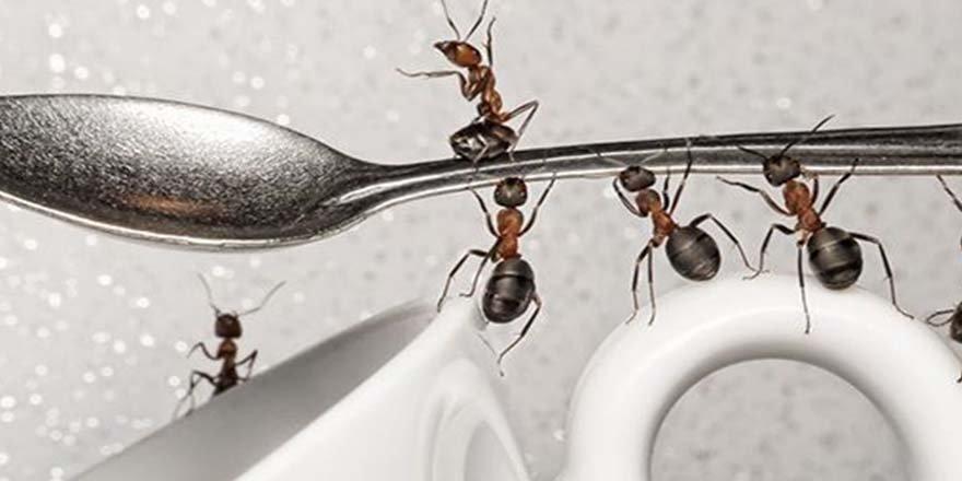 Karıncalardan Kurtulmanın Yolları